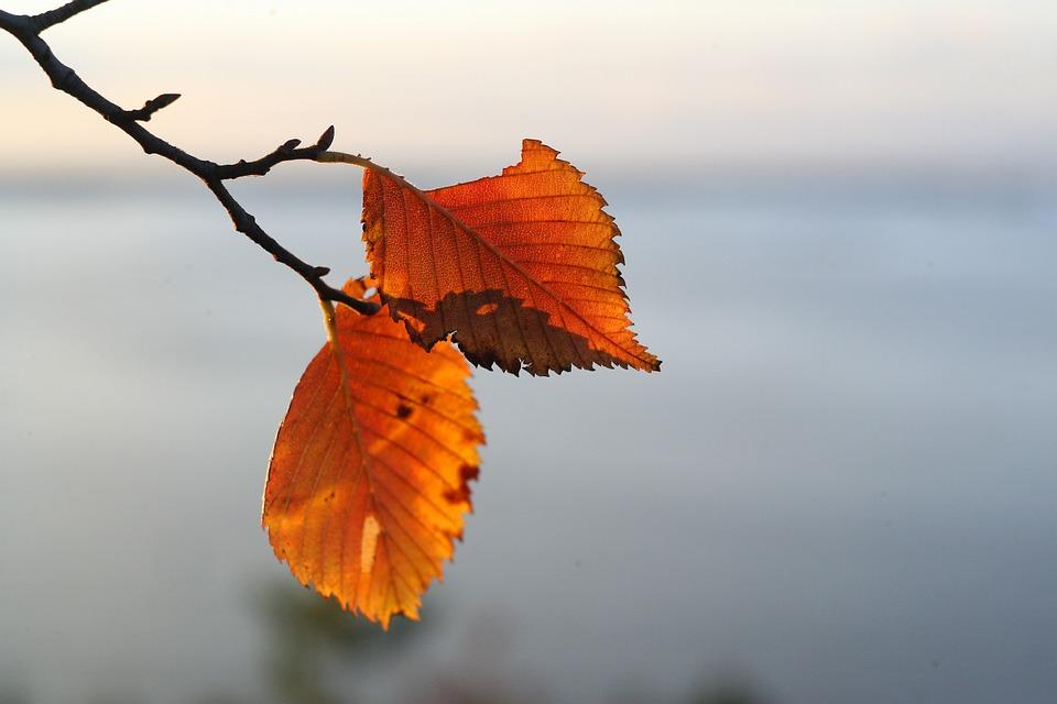 Frýdek-Místek zbaven listí