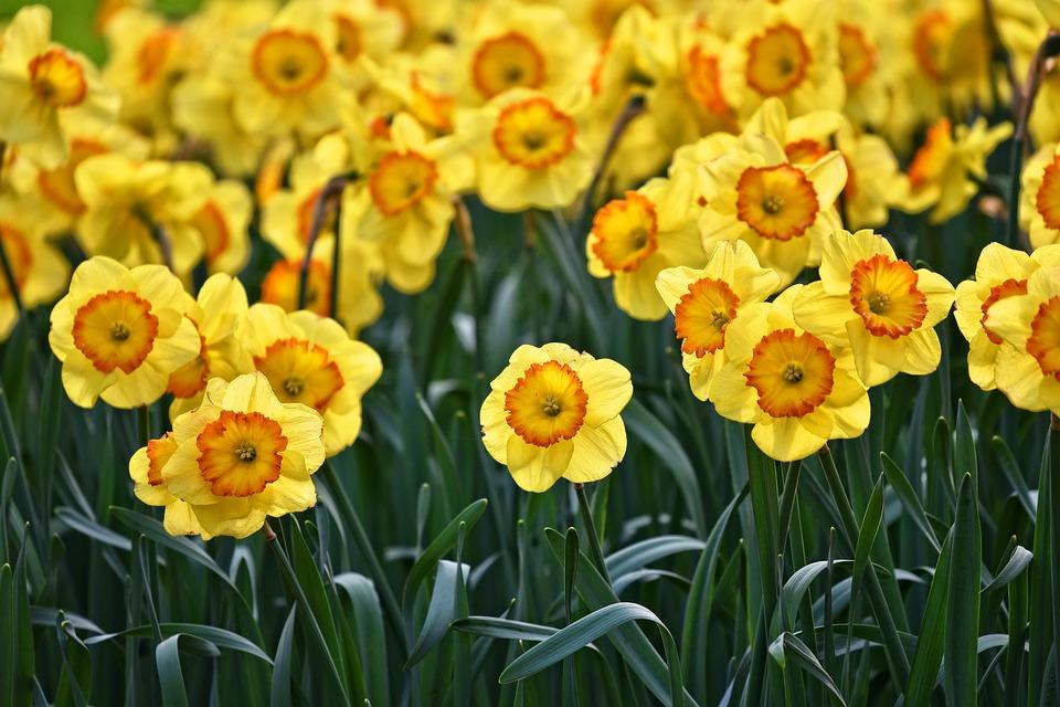 Frýdek-Místek rozšiřuje květinové záhony