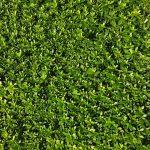 Ve Frýdku-Místku proběhla údržba zeleně
