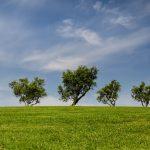 Ve Frýdku-Místku se budou vysazovat stromy